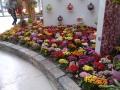 Venlo-20120513-00235